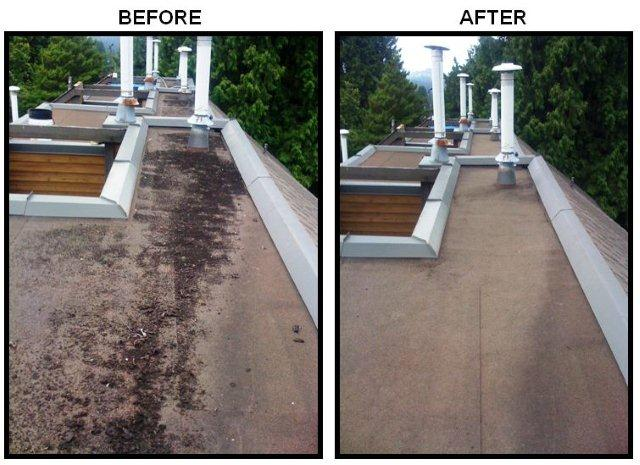 Delta Roof Cleaning And Moss Removal By The Best Langley