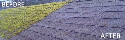 Remove moss from roof Langley